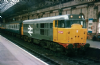 FARISH 371-135 Class 31/1 (Refurbished) 31154 BR Original Railfreight * PRE ORDER 123.21 *